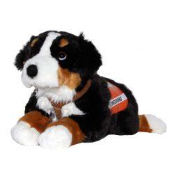 G2 Berner-Sennenhund mit Geschirr und Kenndecke