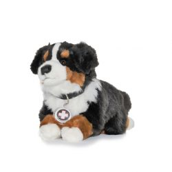 I3 Berner Sennenhund, klein