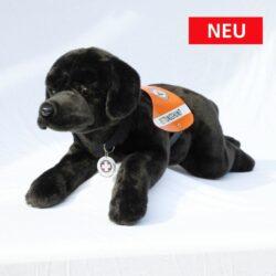 G8 Labrador schwarz, groß, liegend